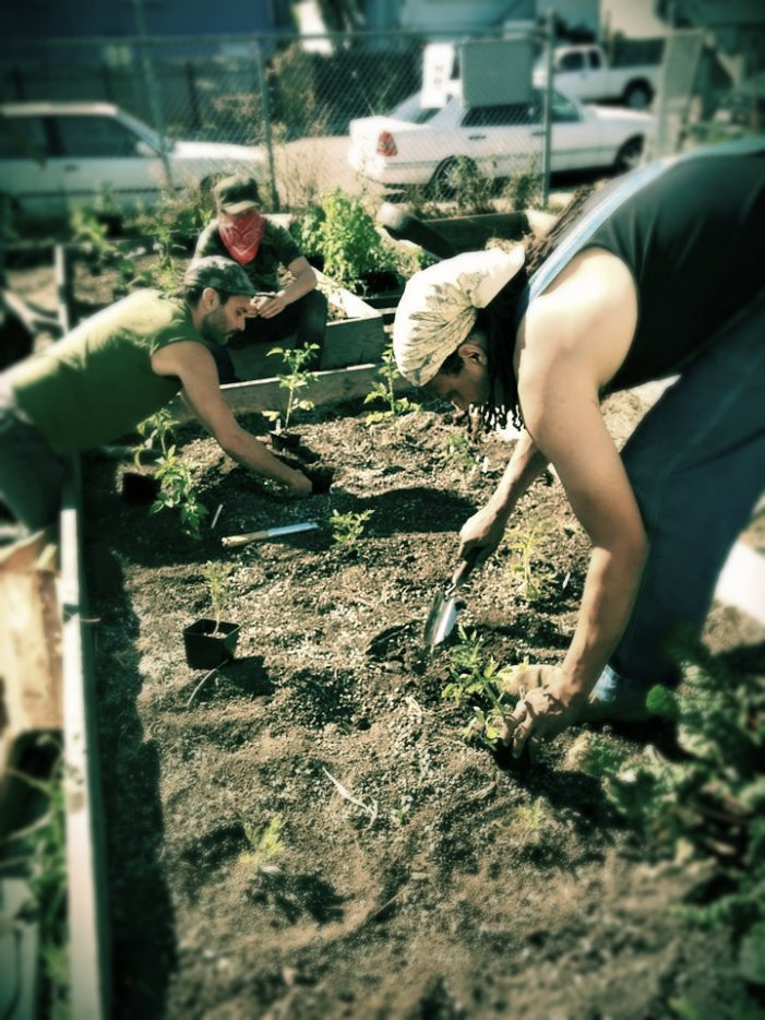 Garden beds go in at a farm occupation in West Oakland, 2015. (photo by Samara Hayley Steele)